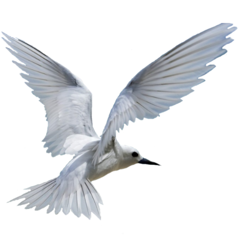 BIRD-WHITE.png