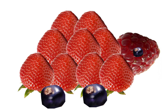 TORTUE-FRUITS.png