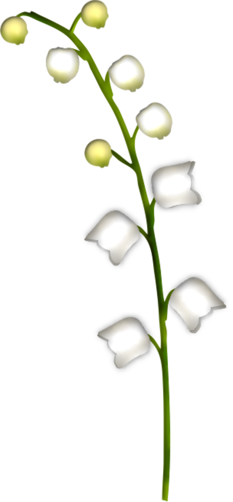 brin-de-muguet17a1.png