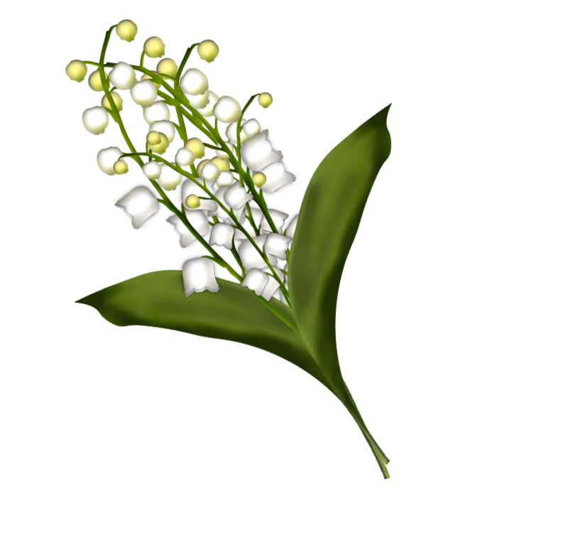 brin-de-muguet17a12.png