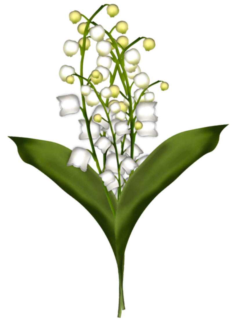 brin-de-muguet17a13.png