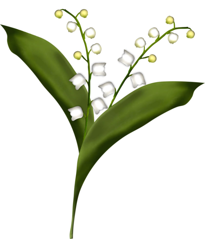brin-de-muguet17a2.png