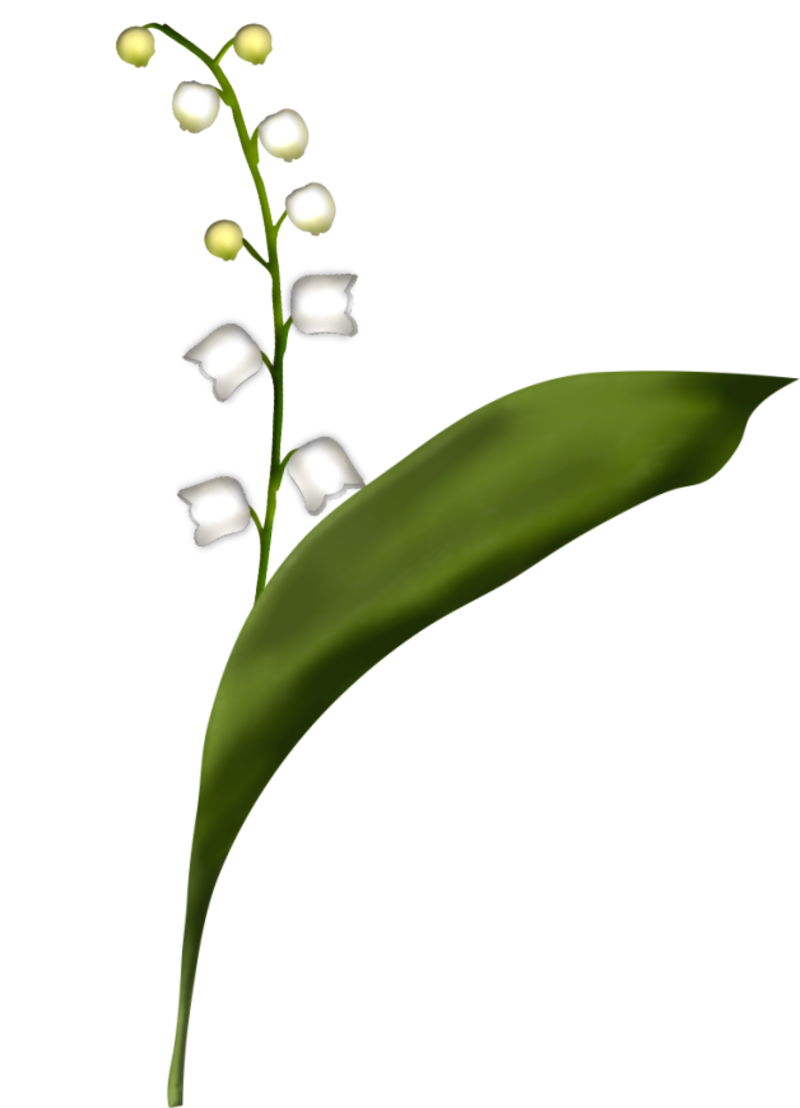 brin-de-muguet17a3.png