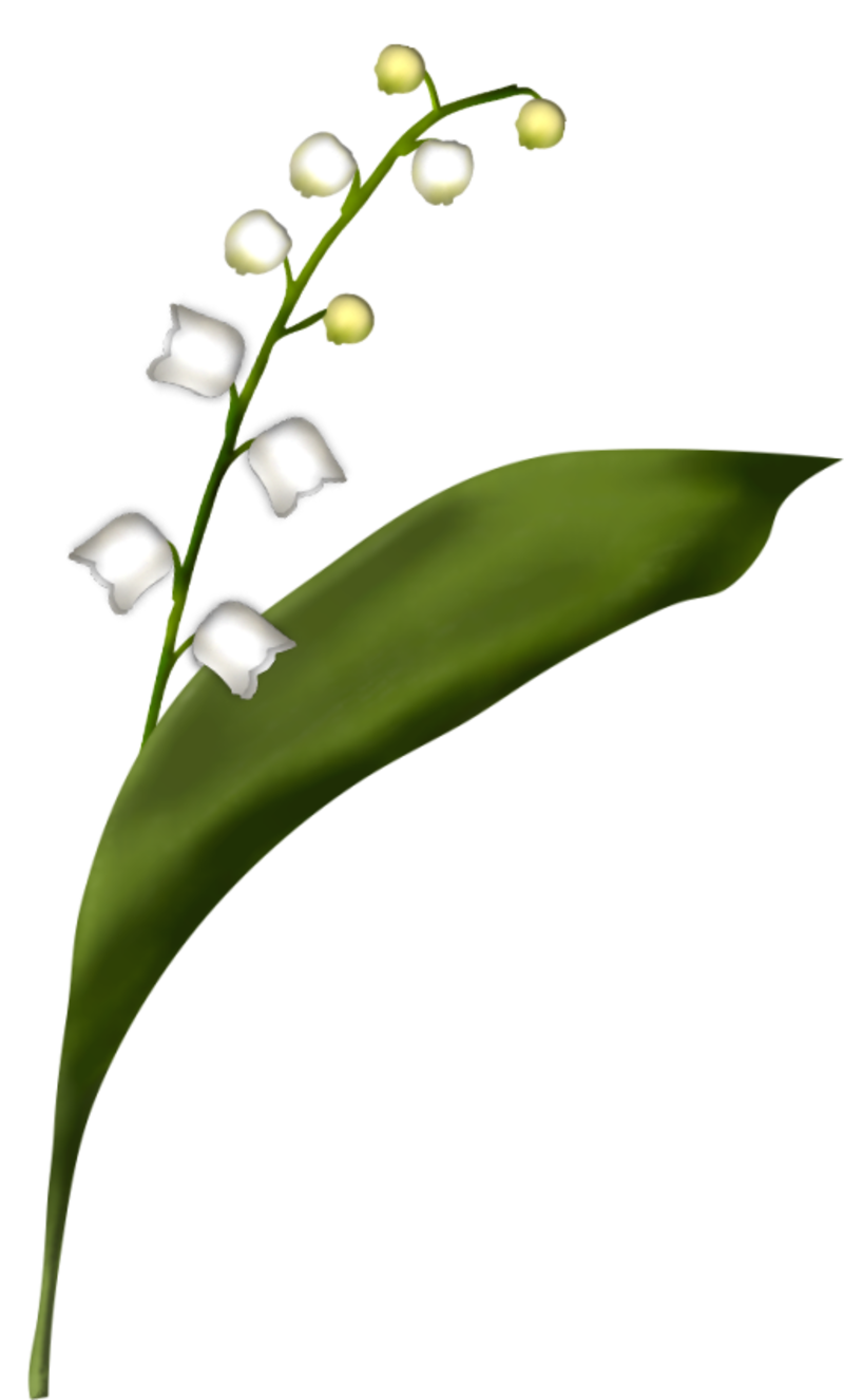 brin-de-muguet17a4.png