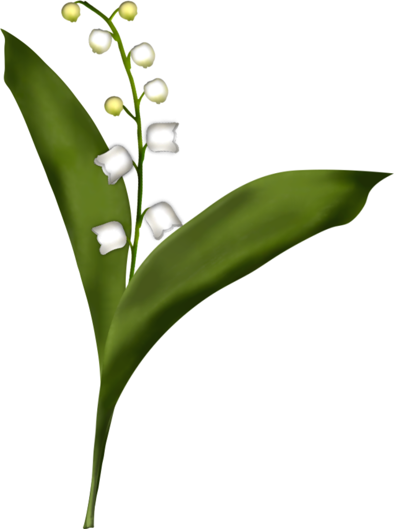 brin-de-muguet17a5.png