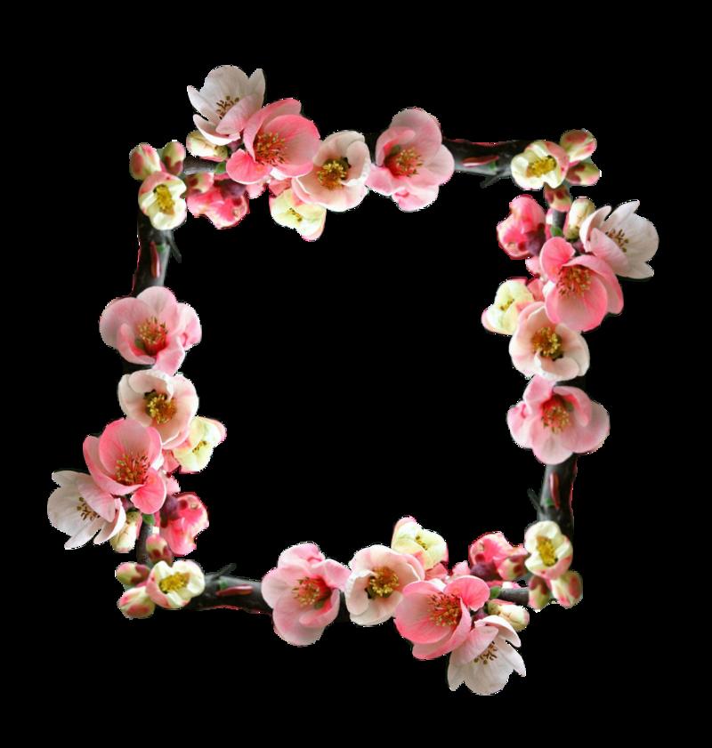cadre-cerisierfleur.png