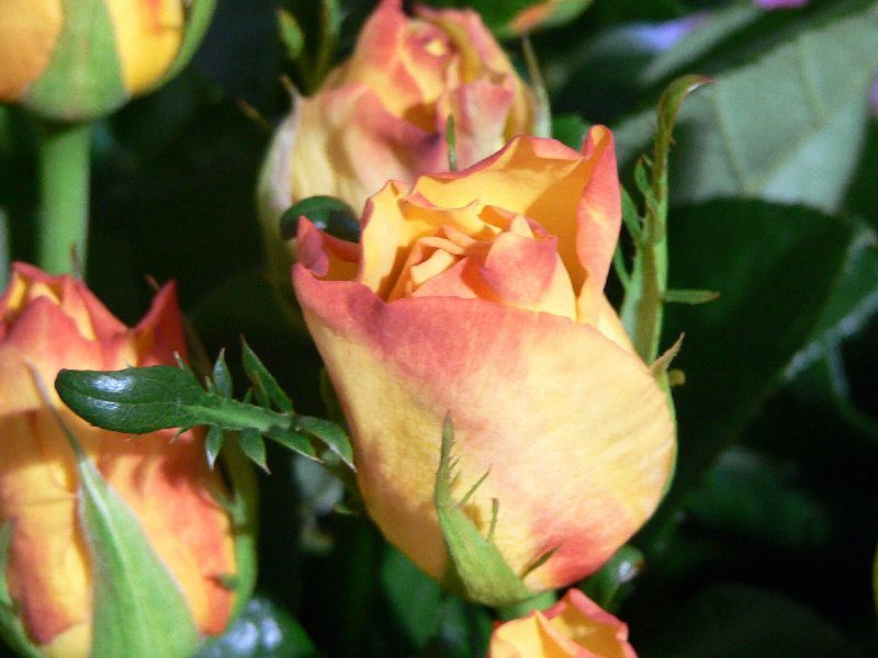 bouquets d'été