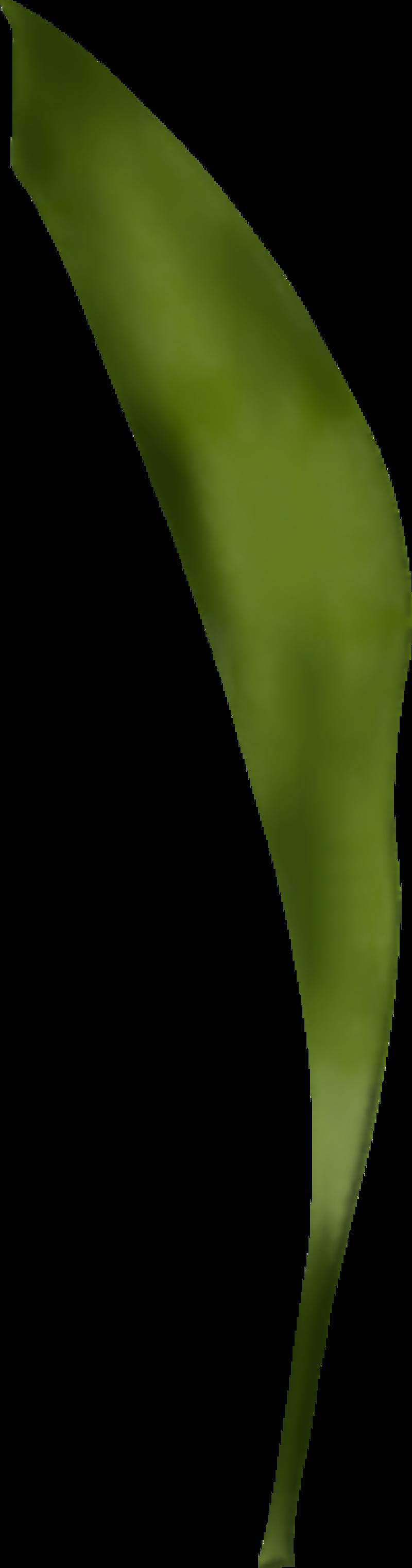 feuillede-muguet17a2.png