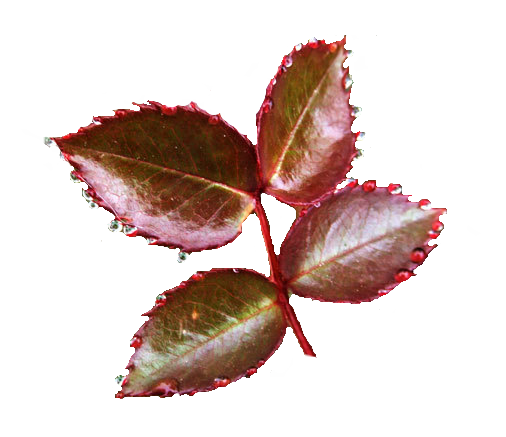 feuilles3.png