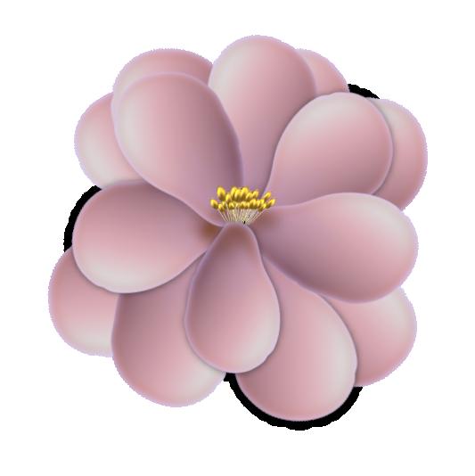 fleur15m2.png