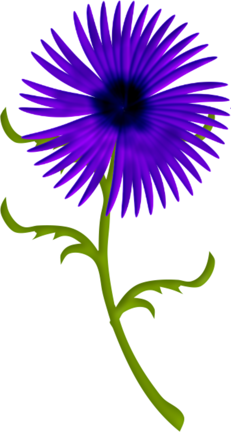 fleurs12m9.png