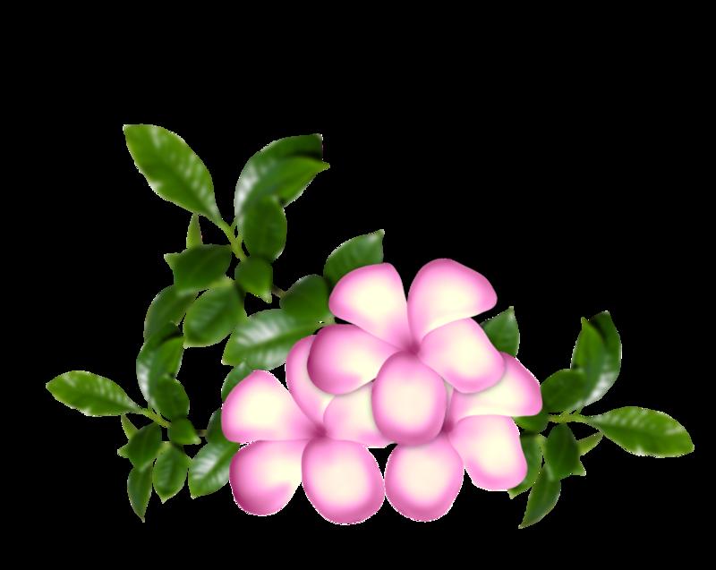 fleurs16m21.png