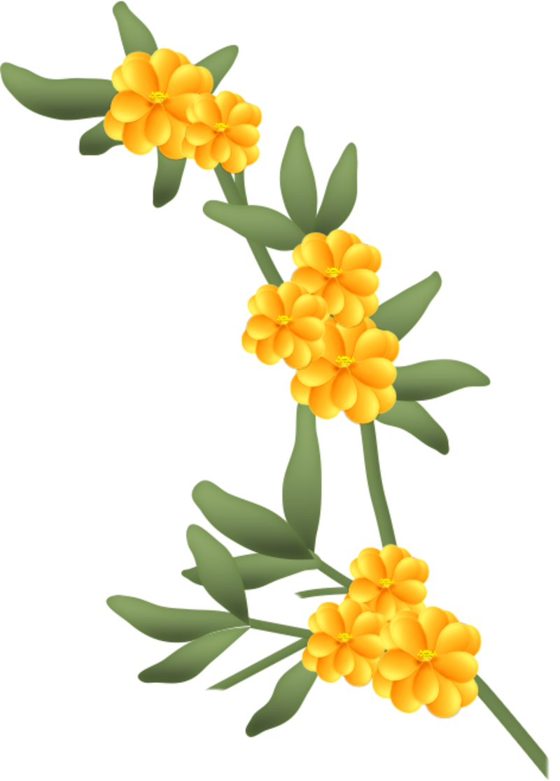 fleurs16m3.png