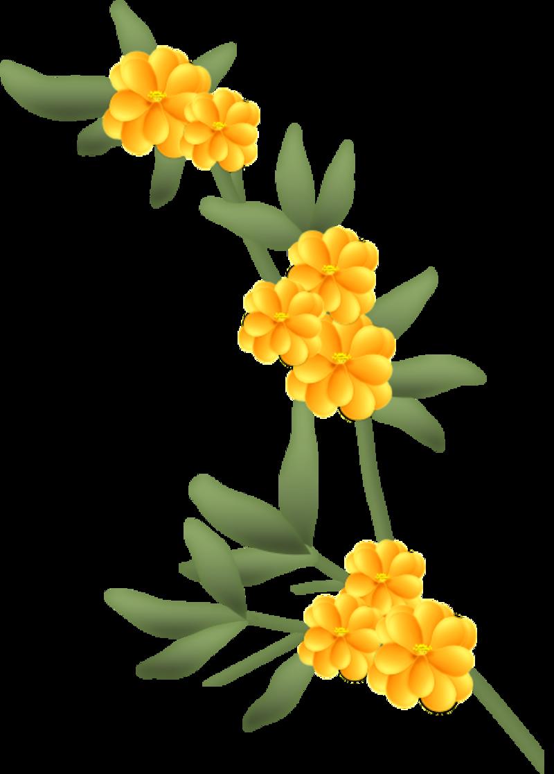 fleurs16m3.png