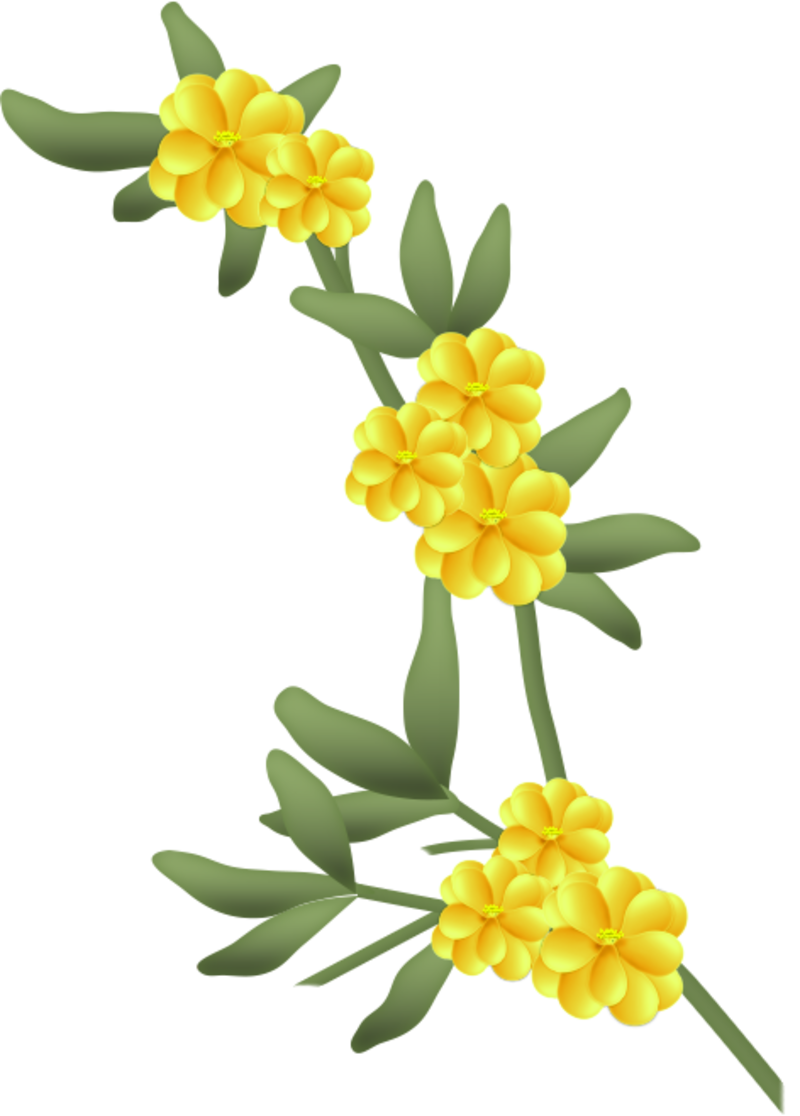 fleurs16m4.png