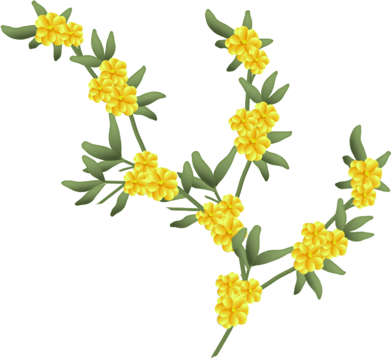fleurs16m5.png