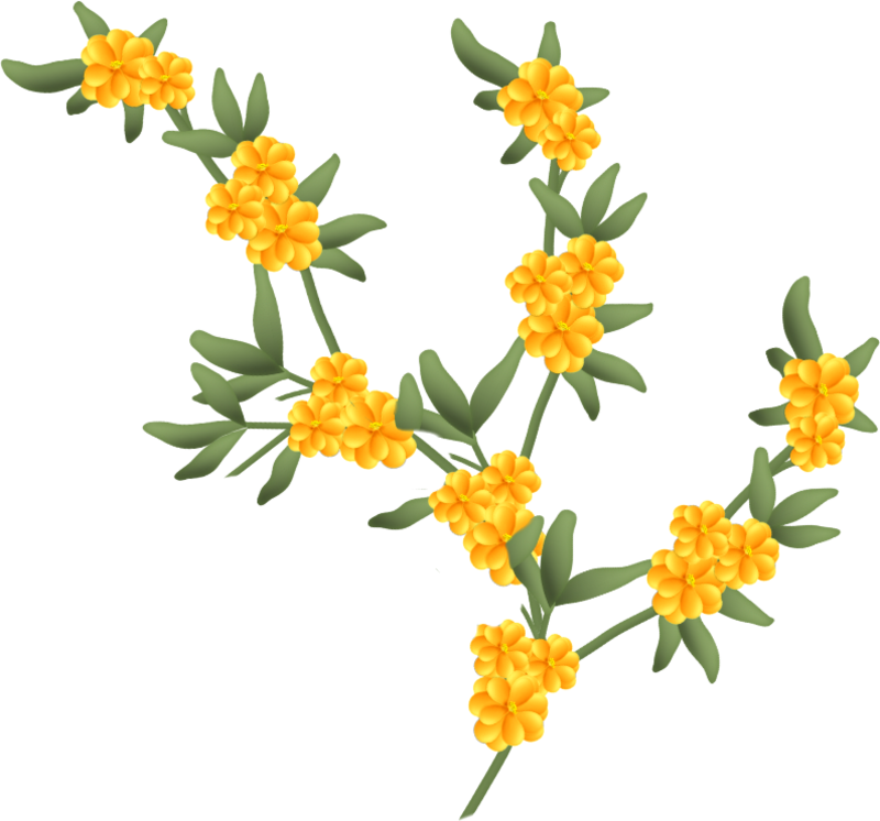 fleurs16m6.png