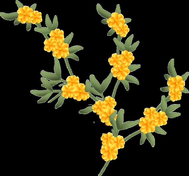 fleurs16m6.png