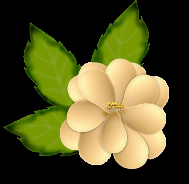fleurs16m9.png