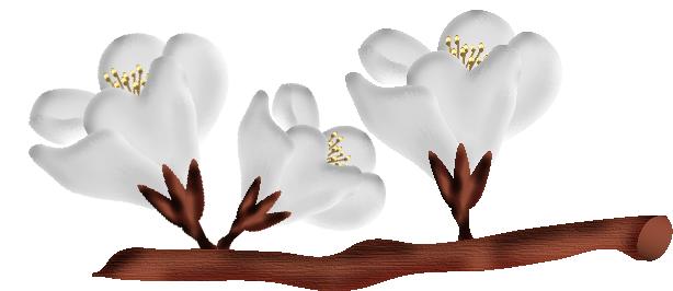 fleurs23m2.png