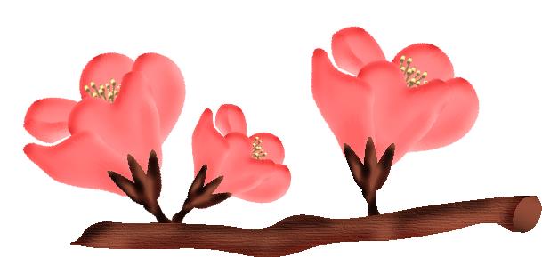 fleurs23m3.png