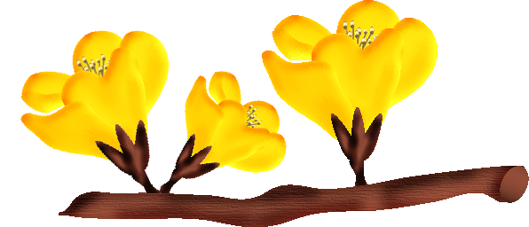 fleurs23m4.png