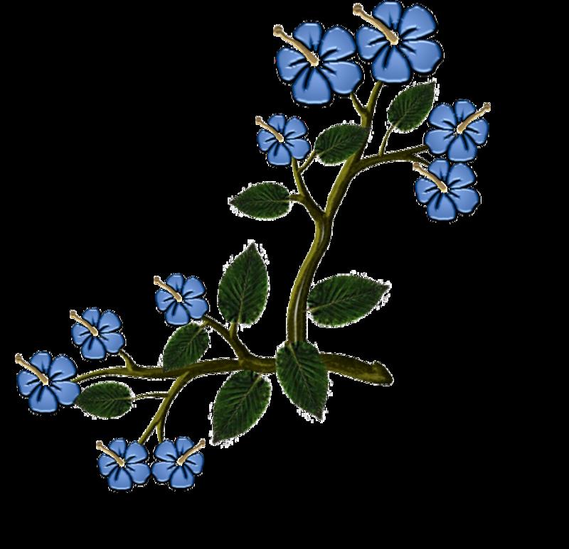 fleurs27janv.png