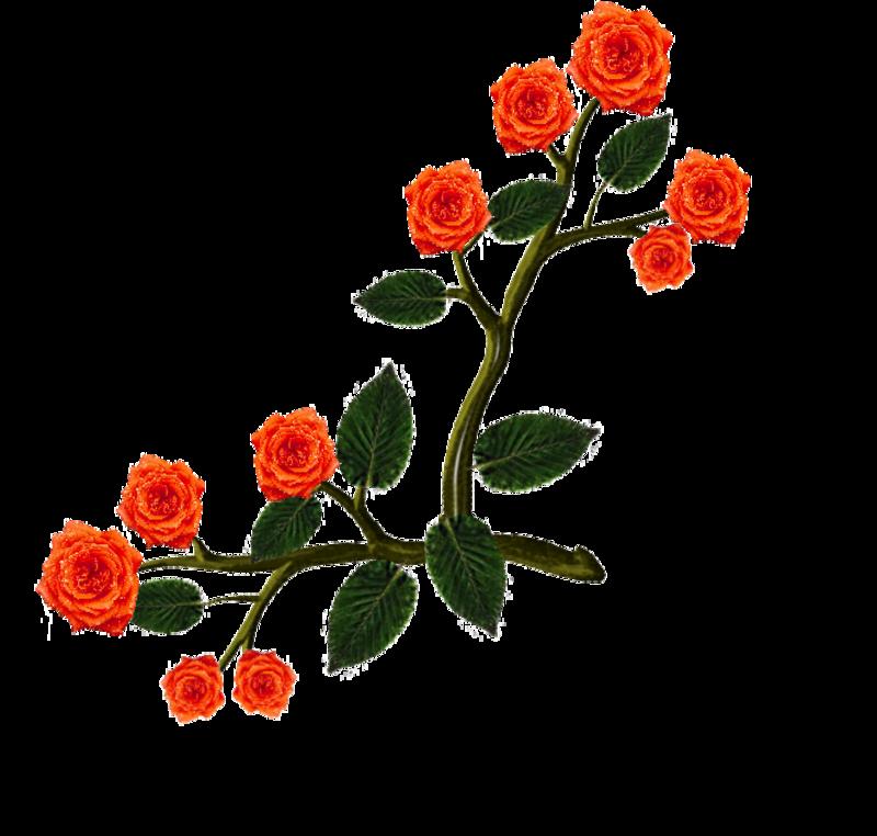 fleurs27janv1.png