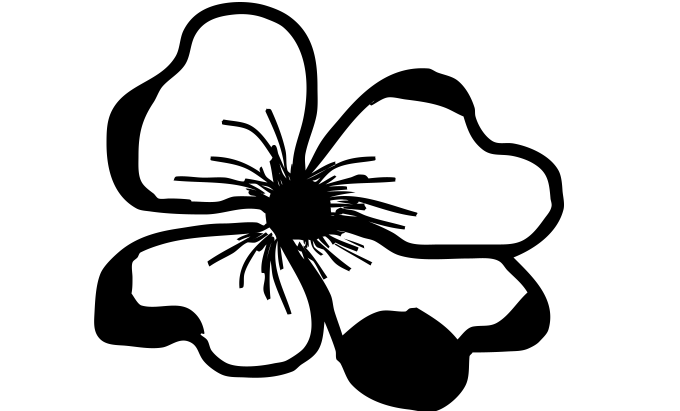 fleurs8dec0.png
