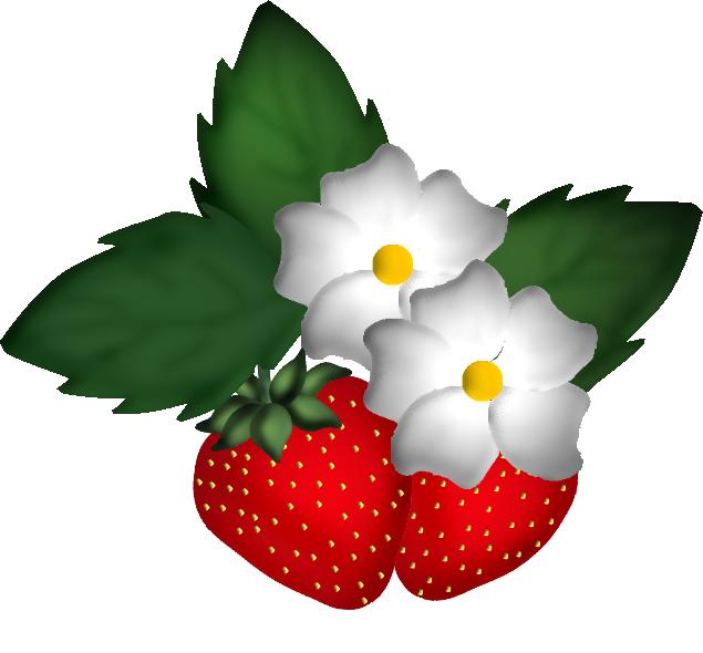 fraise25m4.png