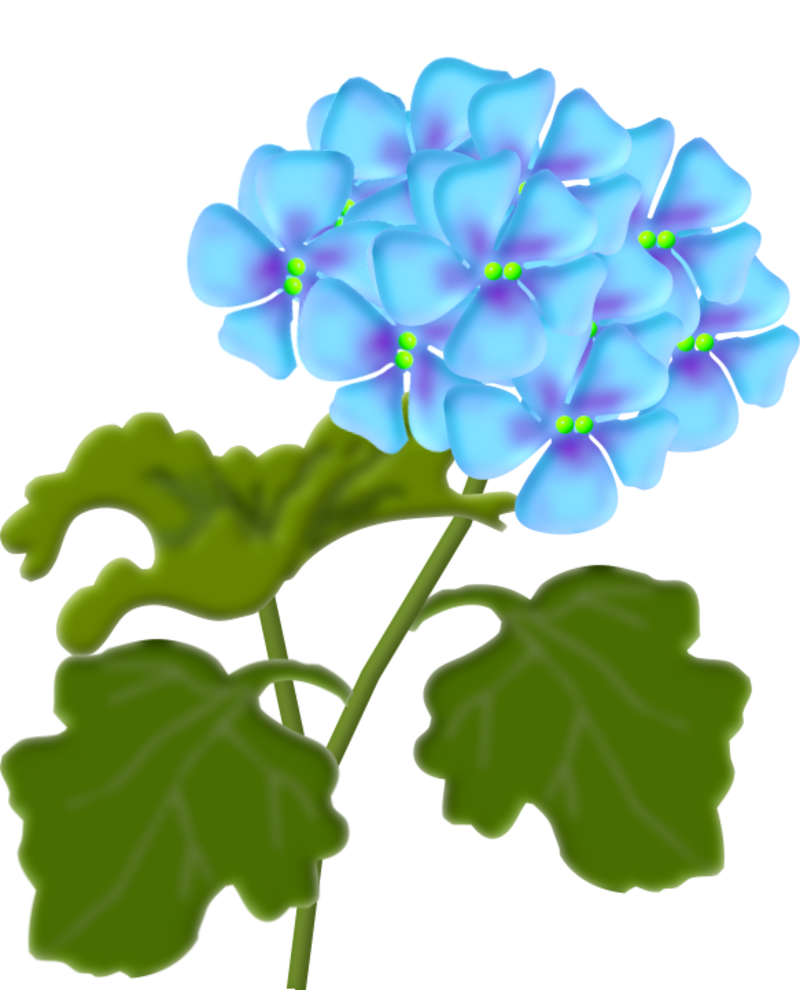 geranium2.png