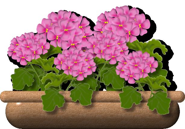 geranium7.png