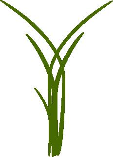 grande-herbe.png