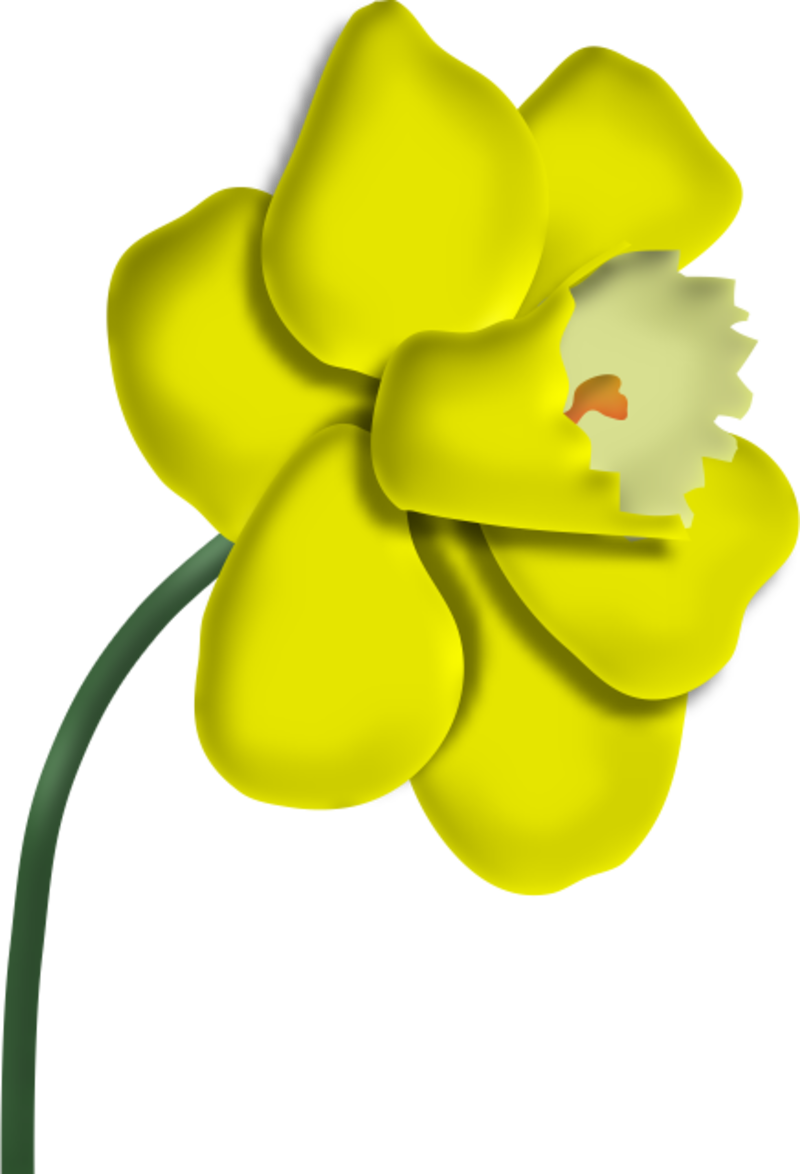 jonquilles15m20113.png