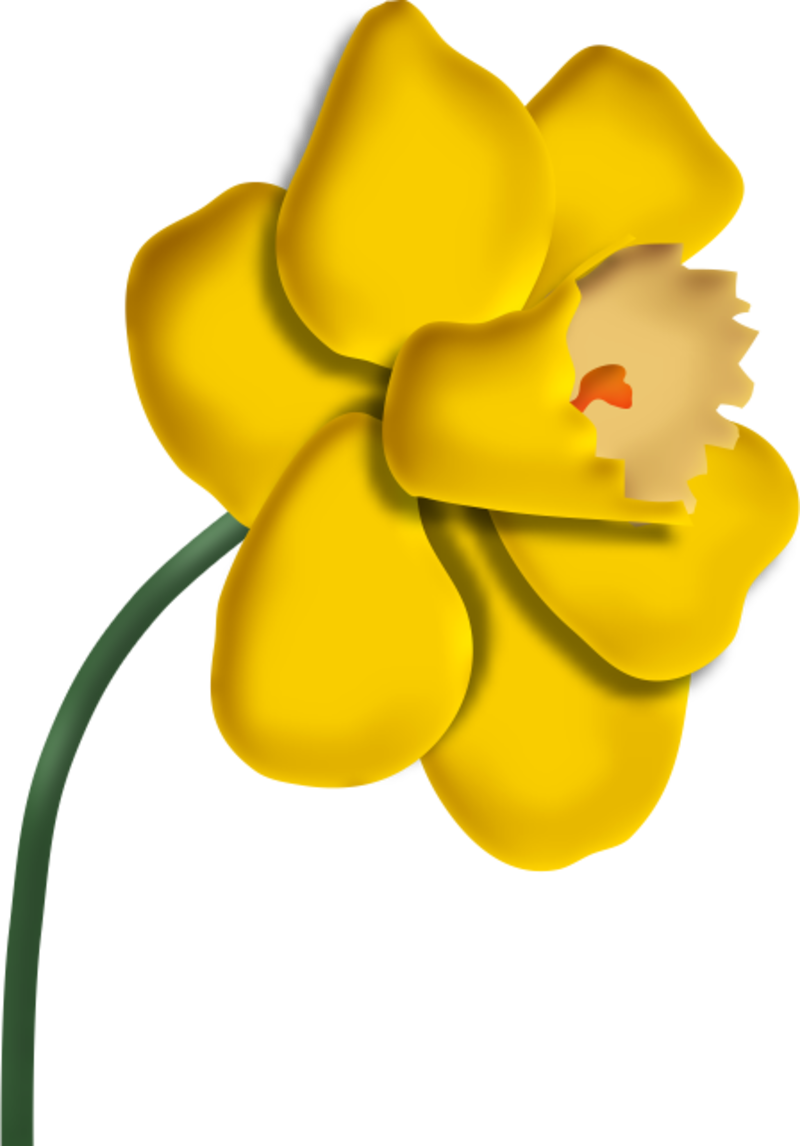 jonquilles15m20114.png