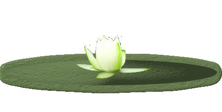 nenuphar.png