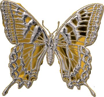 papillon18j20118.png