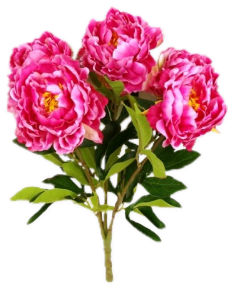 pivoine8m2.png