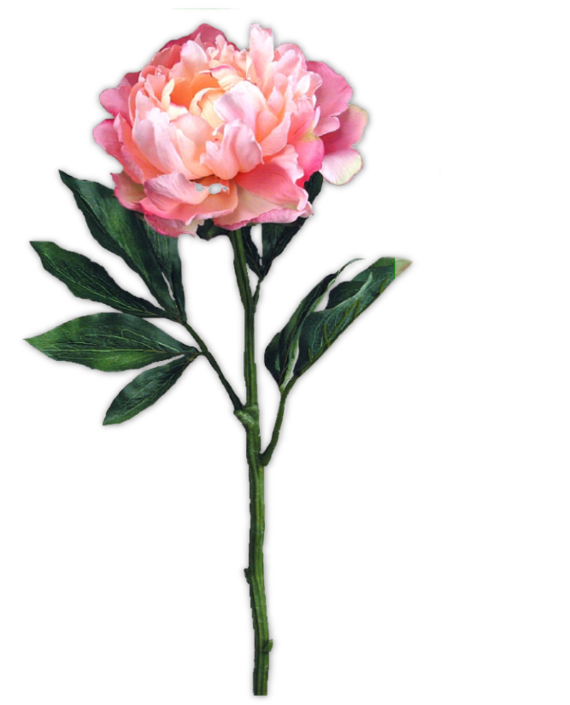 pivoine8m3.png